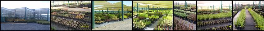 Waimarie Nurseries - Waimarie project - 7km of riparian planting
